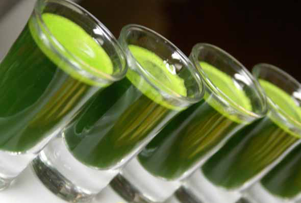 I Drink Wheatgrass Every Day, Here is Why You Should Too!
