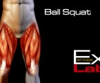 Ball Squat : Leg Exercises ( Quadriceps )