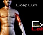 Bicep Curl ( with Band ) : Bicep Exercises