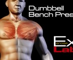 Dumbbell Bench Press : Chest Exercises
