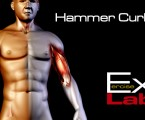 Hammer Curls : Bicep Exercises