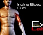 Incline Bicep Curl : Bicep Exercises