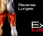 Reverse Lunge : Hamstring Exercises