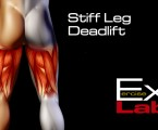 Stiff Leg Deadlift with Band : Hamstring Exercises