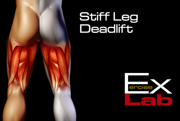 Stiff Leg Deadlift With Band The Best Hamstring Exercises