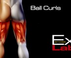 Ball curls : Hamstring Exercises