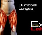 Dumbbell Lunges : Leg Exercises ( Quadriceps )