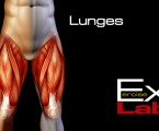 Lunges : Leg Exercises ( Quadriceps )