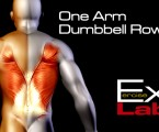 One Arm Dumbbell Row : Back Exercises