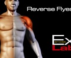 Reverse Flyes ( Rear Delt Raises ) : Shoulder Exercises