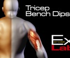 Bench Dips : Triceps Exercises