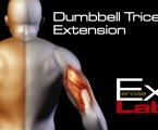 Dumbbell Overhead Tricep Extension : Triceps Exercises